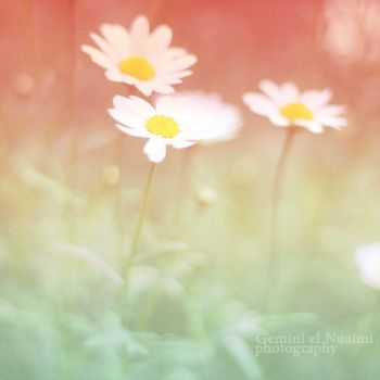 Tones . . . by Miss-Photo