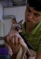 Sphynx cat and her owner by Yerahatte