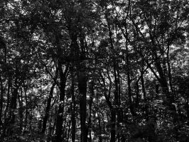 Forested by NostalgiaPhotos