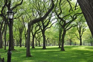Central Park Stock 75 by FairieGoodMother