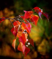 Autumn Leaves 11-16-11 by Tailgun2009