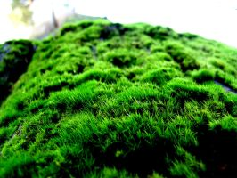 Fuzzy Moss by m0rpheus