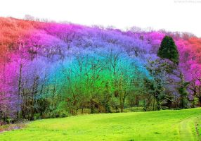 Rainbow Forest by Dirgenesis