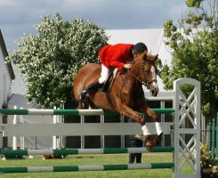 Show Jumping 2 by gee231205