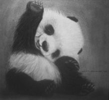 Panda drawing by lyyy971