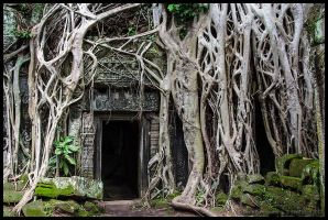 Ta Prohm 2 by Dominion-Photography