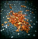 autumn leaves by quadratiges
