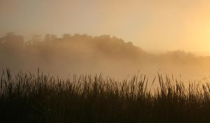 Misty Morning by CathleenTarawhiti
