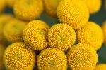 Yellow Bubbles by FlorianHebel
