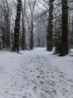 snow in th forest by AestheticTotem
