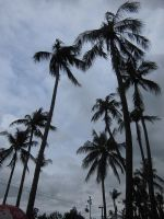 COCONUT TREE 2 by diimaaz