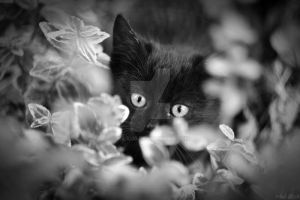 Black cat by Wilku9
