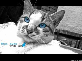 Blue-eyes white cat by Rely