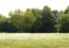 meadow white flowers and trees background by Nexu4