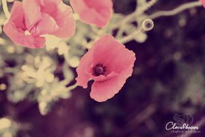 Coquelicot01 by clair0bscur