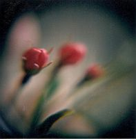 Buds Of Summer by Lomo440