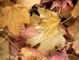 Autumn leaves_1 by MunsenTheBiscuit69