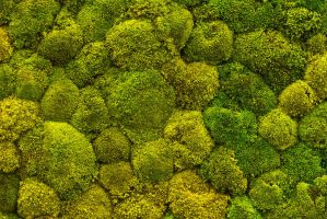 Moss Canopy by parallel-pam