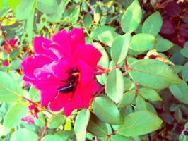 Flower, Leaves, Bumblebee by Chlodulfa