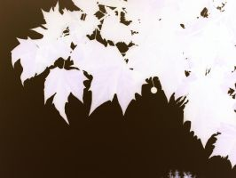 White Leaves by Yaehara