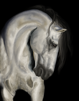 Andalusian horse by BlackReason