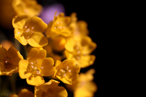 Yellow on Black by FriendFrog
