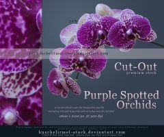 Purple Spotted Orchids Cut Out by kuschelirmel-stock