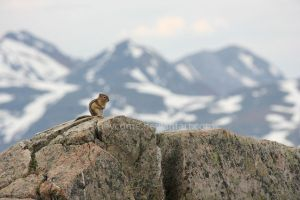 mountain climber. by theycome