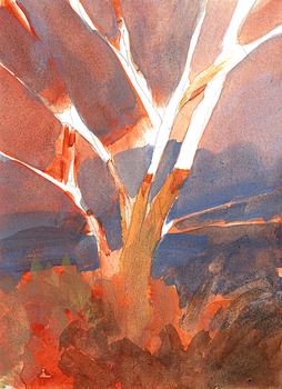 Tree on a winter evening by parkurtommo