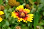 Bee on flower by beautythroughalens