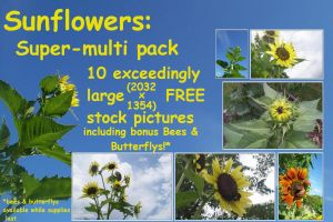 sunflower 10pack by BANanered