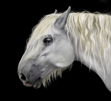Percheron by Opium01