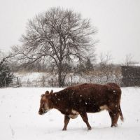 Winter Pasture by cylan