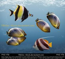 Indic Ocean Fishes IV PNG by YBsilon-Stock