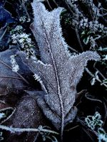 ice leaf by ZoeeB
