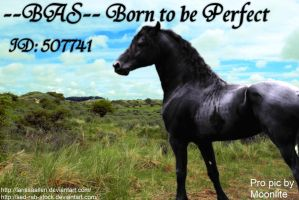 BAS Born to be Perfect by MoonliteHoofbeats