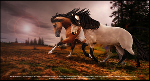 The Climb by equinestudios