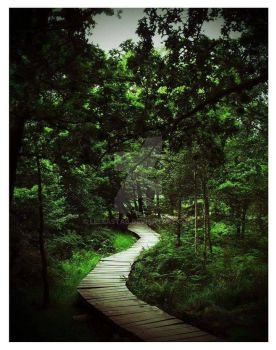 Winding Witchy Woodland Path by lellastag