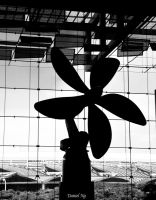 Flower Windmill 2 by baby-drummer23