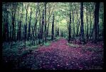 Tranquility Walk by FallesenPhotography