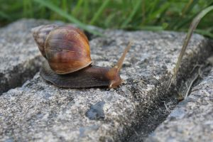 Slow As A Snail by Elliums