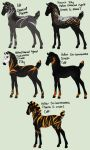Hallow x Charcoal Foals by amour-interdit