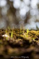 Where We Hide VI Grass and Moss by SelenaMarie
