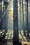 Mother Spruce by TEMPERATE-SAGE