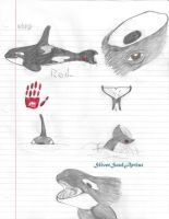 Rod the Killer Whale Doodle Practice by SilverSoulArtist