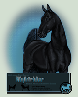 FOR SALE - Nightrider Stud Card by nds-stock