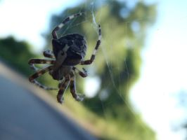 Spider #2 2 by Mihaela7