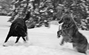 Dogs in action by eyenoticed