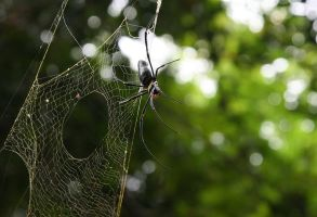 Australian Spider by LostImagesProject
