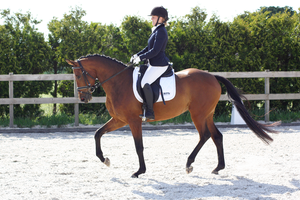 Dressage stock 28 by ByMelody